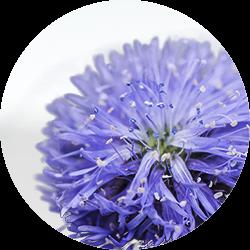 Skincare-motive-dermacosmetics-flower-Web-Rendition
