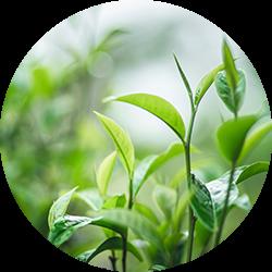 Skincare-motive-dermacosmetics-plant-Web-Rendition